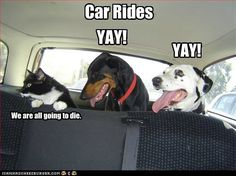 Car rides: dogs=YAY! cats=We are all going to DIE!