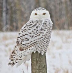 Google Image Result for http://4.bp.blogspot.com/-bdLlwof-YZM/ULt6aIpiwmI/AAAAAAAABEE/65xxWd3NVYs/s1600/Snowy%2Bowl.JPG