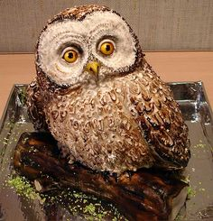Owl cake.This one is for Carolyn