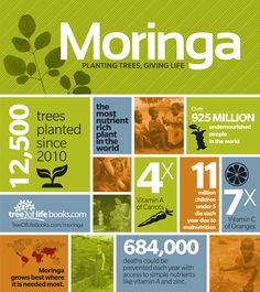Moringa oleifera - Main ingredient in Zija - Live saving nutrients - Get it, take It, feel it working.