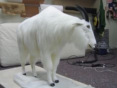 mountain goat - faux taxidermy