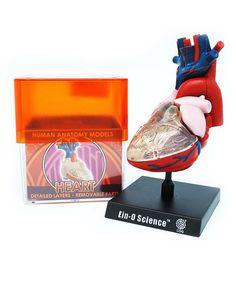 Heart Model Kit by TEDCO #zulily #zulilyfinds