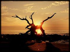 Sunset - enhanced photo via Aviary by Roxanne Kelly, via Flickr