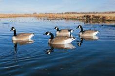 Big Foot™ Flocked Head Floater Goose Decoys : Cabela's