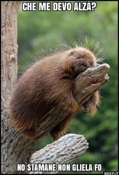 21 Photos Of Cute And Peaceful Sleeping Animals - Pets Impact Nature Animals, Animals And Pets, Baby Animals, Funny Animals, Cute Animals, Wild Animals, Talking Animals, Strange Animals, All Gods Creatures