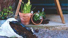 Jaro je tu, ozdobte svou zahradu zeleným zátiším!