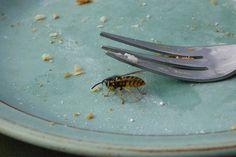 Vil du have din aftensmad i fred - og undgå et smertefuldt hvepsestik, så skal du blot finde, sølvfolie, tørret kaffegrums og tændstikker frem.