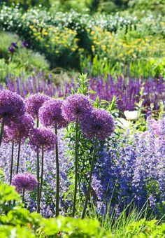Tiltrækker bier og sommerfugle