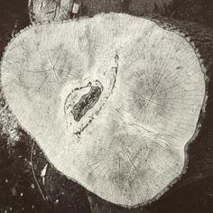 Big Ash crux cracking in the Devon sunshine. #wabisabi #wood