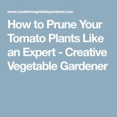 How to Prune Your Tomato Plants Like an Expert - Creative Vegetable Gardener