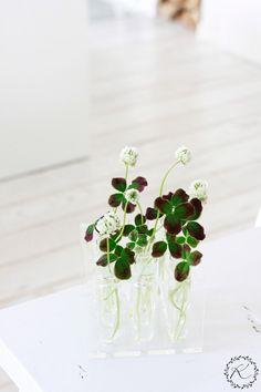 KUKKALA #apila #clover #trifolium