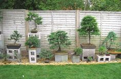 Love the economic idea for bonsai stands