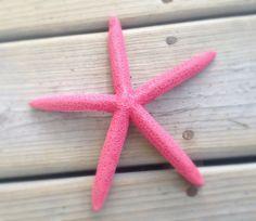 67 painted starfish watermelon pink starfish by PerFecteauDecor, $4.25