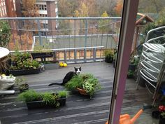 after my cat died I started to grow a walk-through-garden. but I still miss that cat.
