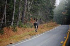 View Photos Of The Adirondacks: Franklin Lake, Deer & More: Adirondack Photo Gallery