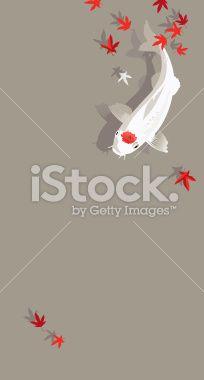 Koi fish in autumn pond Royalty Free Stock Vector Art Illustration