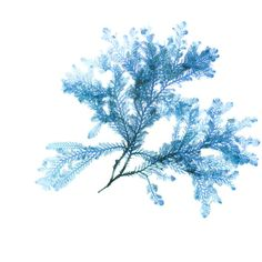 Seaweed Print, Teal Blue, Coastal Decor, Beach Art, Small to Extra... ($13) ❤ liked on Polyvore featuring home, home decor, wall art, teal blue home decor, beach scene wall art, beach home accessories, coastal home decor and coastal wall art