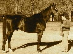 Cipayo(1974)Lacydon- Tsarina By Tamerlane. 4x4 To Hyperion, 4x5x5 To Gainsborough, 5x5 To Blandford & Pharos. Top Sire Family In Argentina For Many Years.: