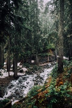 "skatedistrict: ""Rush Creek, Indian Heaven Wilderness, WA. June 26. """