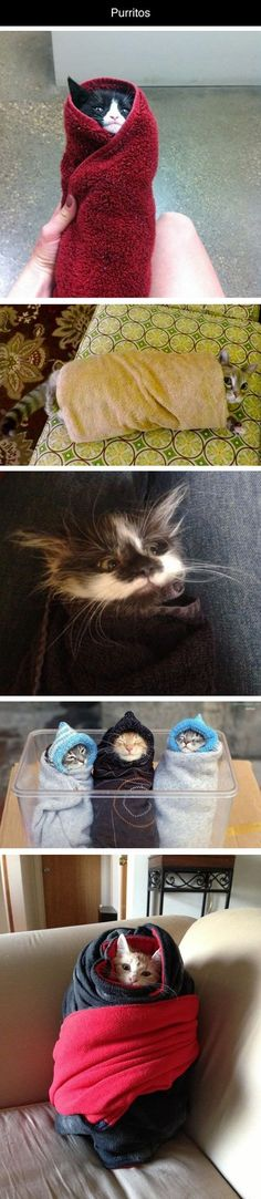 Purritos cute animals cat cats adorable animal kittens pets kitten funny animals