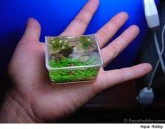 smallest fish tank ever