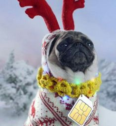 Pug.. should have been in the Grinch stole Christmas rather than the other dog!