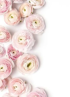 powdery pale pink Ranunculus - these flowers always make me think of super thin fragile paper!