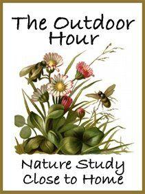 Nature homeschool curriculum. Blog that works through the book Handbook of Nature Study.