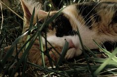 mi enana pequeña by : FuGa :, via Flickr