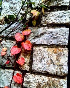 """132 """"Μου αρέσει!"""", 3 σχόλια - Evanthia Kaba (@evanthia_kaba) στο Instagram: """"#detailshots #details #leaves🍃 #naturephotography #nature_pics #nature #naturelover #naturelovers…"""" Firewood, Texture, Crafts, Instagram, Surface Finish, Woodburning, Manualidades, Handmade Crafts, Craft"""