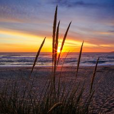 Sunset at Johanna Beach Great Ocean Road Australia  #australia #greatoceanroad #sunset #warnambool #happynewyear #clouds #nature #beautiful #landscape #canon #bestphoto #bestpic #picoftheday #downunder #sand #sky #grass #dunes by chrisjones_photosofhome