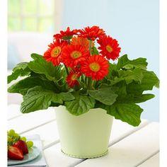 Plants In Noida Plant Nurseries Gift A Online Send