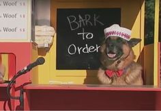 Funny Dog Sells Hot Dogs It's really so funny.... You'll laugh so hard! LOL :D  http://bit.ly/1QE41nr  www.howley.in  #funnydog #sellsHotDogs #laughaloud #howley