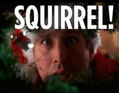 19 End Of Vacation Memes. End of vacation? But not end of our memes…. Eddie Christmas Vacation, Griswold Christmas Vacation, Best Christmas Vacations, Christmas Movie Quotes, Best Christmas Movies, Christmas Humor, Christmas Fun, Holiday Movies, Christmas Pajamas