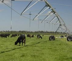 El riego mecanizado con Pivots permite en Nueva Zelanda gestionar más vacas por hectárea de pastos, manteniendo la hierba más productiva durante todo el año
