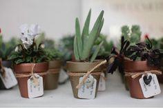 homegrown succulents Poppytalk: Real Wedding: Judith + Chris
