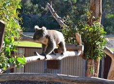 A traveler's experiences at Werribee Open Range zoo in Melbourne Melbourne Attractions, Open Range, Main Attraction, City, Travel, Animals, Places, Viajes, Lugares
