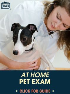 To treat your own pets, check out this at-home pet veterinary exam. Learn if it is okay to give your dogs ibuprofen or other human pills