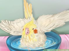 How to Keep Your Cockatiel Happy. A cockatiel is a bird native to Australia. They are commonly kept as pets and can make great companions. Here are a few tips to keep your little feathered friend happy and healthy. Get the right size cage. Cockatiel Care, Happy We, Bird Cages, Cute Birds, Parakeet, Decoration, Pet Care, Parrot, Make It Yourself
