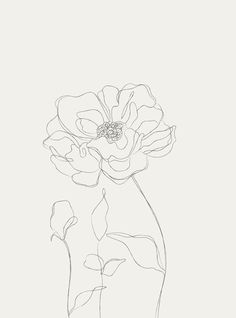 Purchase on Creative Market - beautifully illustrated editable botanical sketches. Hand Illustration, Floral Illustrations, Beauty Illustrations, Line Art Flowers, Flower Art, Room Sketch, Art Sketches, Art Drawings, Dress Sketches