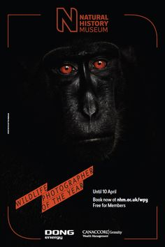 Petr Babousek's 'Reflection in black' - a Celebes black macaque stares out from the poster for exhibition. Natural History Museum London, Art Exhibition Posters, Museum Poster, History Posters, National History, Acrylic Painting Tutorials, Poster Layout, Wealth Management, Nature Photography