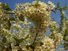Nebojte se říznout do stromu - je ten pravý čas! Gardening, Fruit, Health, Plants, Health Care, Lawn And Garden, Plant, Planets, Horticulture