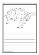 Reptiles colour and write worksheets (SB8536) - SparkleBox