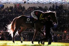 """Orfevre """"ARIMA KINEN 2013"""" I'll never forget you.Thank you & Good bye Orfe!!"""