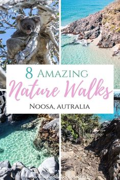 You can choose from many Noosa National Park walks once you decide to visit this beautiful park. Noosa National Park is a natural gem you have to visit. Perth, Brisbane, Us Travel Destinations, Places To Travel, Australia Destinations, Amazing Destinations, Coast Australia, Australia Travel, Great Barrier Reef