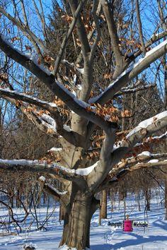 Treasured Memories #photography #card #print #canvas #nature #foliage #tree #winter