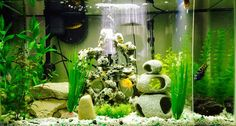 AFRICAN CICHLID TANK SET-UP AND CARE: Information and photos on how to set up an aquarium environment and take care of African Cichlids.