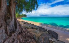 Download wallpapers Hawaii, USA, Kalihivai, ocean, beach, palm, sand, the Pacific Ocean