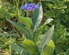 Original Image, Montana, The Originals, Plants, Flathead Lake Montana, Plant, Planets