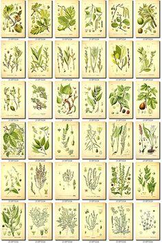 LEAVES GRASS-50 Collection of 160 vintage от ArtVintage1800s